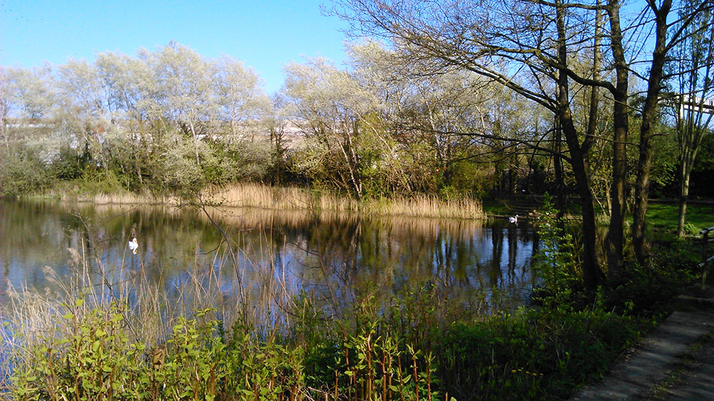 Dafen pond live4fishing for Trout fishing ponds near me
